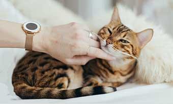 猫-鼻をつけてくる-鼻をこすりつける-指先-理由
