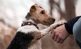 犬-言うことを聞かなくなる-原因-お手-伏せ-しなくなった-画像