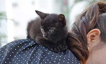 猫-肩に乗る-理由-背中に乗ってくる-画像