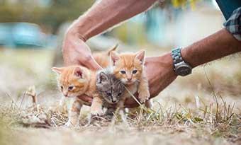 猫-飼いたい人-猫を飼って後悔-子猫と手-画像
