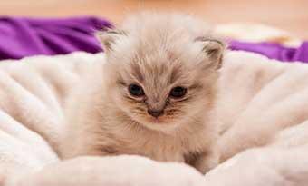 猫-飼いたい人-猫を飼って後悔-子猫-画像