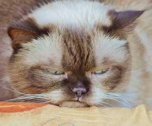 猫-半目-画像2
