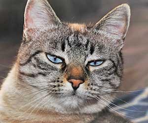猫-半目-画像