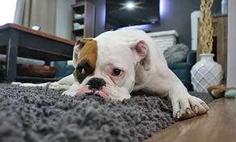 犬-ゴミ箱をあさる-原因-対策-画像