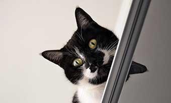 初心者-猫を飼うのに必要な物-費用-高い場所-画像