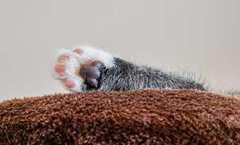 猫の爪とぎグッズ,ダンボール,手作り,方法-猫前足画像