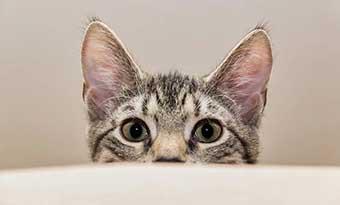 猫-トイレ-砂-飛び散り-臭い-対策-画像