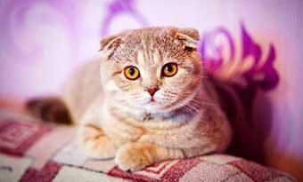 雑種-三毛猫-キジトラ-サバトラ-性格-純血猫-画像