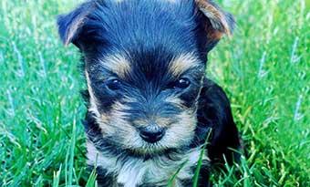 犬-褒めて育てる-褒める-タイミング-かわいい-画像