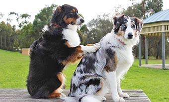 犬-上下関係-画像