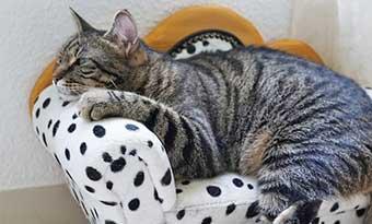 猫-顎を乗せる-意味-顎をつけて寝る-理由-ソファ肘掛け-画像