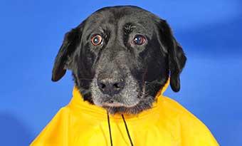 犬-レインコート-小型犬-中型犬-大型犬-おすすめ-おしゃれ-足付き-画像