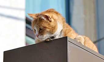 猫-冷蔵庫の上-炊飯器の上-乗る-理由-対策-キーボードに乗る-高い場所-画像