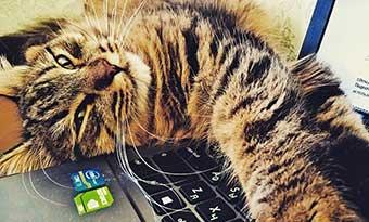 猫-冷蔵庫の上-炊飯器の上-乗る-理由-対策-キーボードに乗る-パソコン-画像