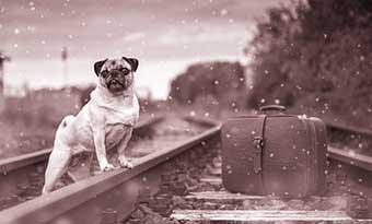 犬-猫-電車-料金-電車に乗せる-バッグ-カート-画像