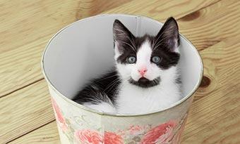 猫-ゴミ箱-対策-あさる-倒す-蓋付き-ロック-白黒猫-画像