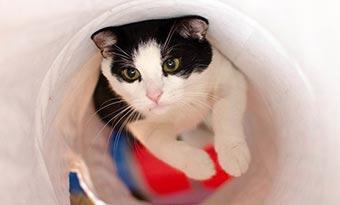 猫-ゴミ箱-対策-あさる-倒す-蓋付き-ロック-画像