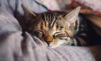 猫-顎を乗せる-意味-顎をつけて寝る-理由-腕の上-画像