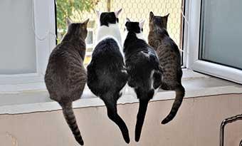 猫-多頭飼い-ご飯-トイレ-順番待ち-窓際-画像