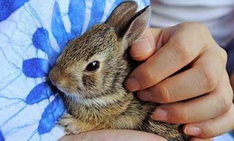 ウサギ-鳴き声-種類-意味-ブウブウ-キュウキュウ-キーキー-プップッ-リラックス-画像