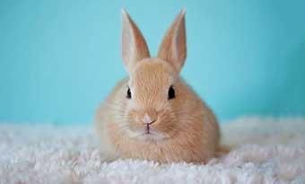 ウサギ-カーペット-掘る-かじる-理由-前足-バタバタ-ストレス-グッズ-画像