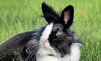 ウサギ-鳴き声-種類-意味-ブウブウ-キュウキュウ-キーキー-プップッ-画像