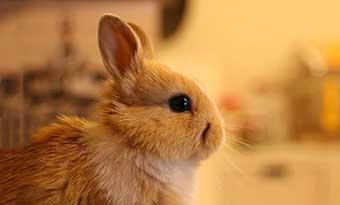 ウサギ-急に走る-突然暴れる-理由-画像1