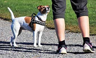 家庭犬トレーナー-資格-1級-2級-通信-費用-独学-画像