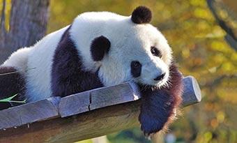 日本-パンダがいる-動物園-全国-何頭-画像
