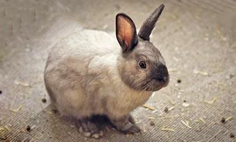 ウサギ-糞-肥料-大量-画像