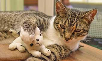 猫-家具-噛む-ソファー-爪とぎ-対策-ボロボロ-防止-方法-画像1
