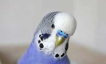 インコ-文鳥-オウム-ケージ-噛む-原因-対策-画像2