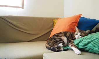 猫-家具-噛む-ソファー-爪とぎ-対策-ボロボロ-防止-方法-画像2