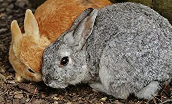 ウサギ 頭こすりつける 画像2