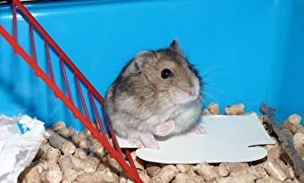 ハムスター 飼育 画像1