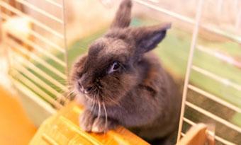 ウサギ,嫌がる音,嫌いな匂い,画像1