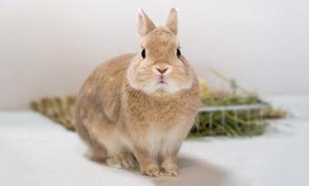 ウサギ,嫌がる音,嫌いな匂い,画像2