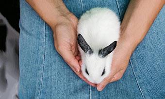 ウサギ,背中に乗る,意味,膝に乗ってくる,理由,画像1