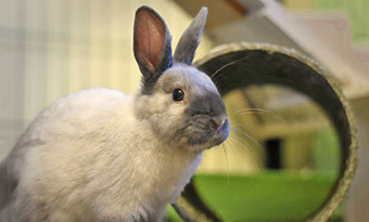ウサギ,背中に乗る,意味,膝に乗ってくる,理由,画像2