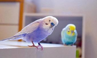 インコ,放鳥,フン処理,画像1