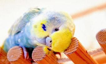 インコ,放鳥,フン処理,画像2