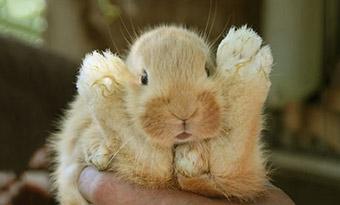 ウサギ,足の裏,黄色い,洗いたい,画像