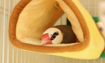 文鳥,換羽期,元気ない,寝る,イライラ,噛む,画像1