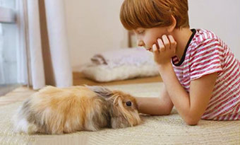 ウサギ,撫でる,ぺたんこ,伏せる,歯ぎしり,撫でると頭を上げる,画像2