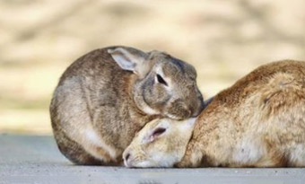 ウサギ,撫でる,ぺたんこ,伏せる,歯ぎしり,撫でると頭を上げる,画像1
