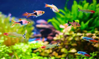 留守中,旅行中,熱帯魚,餌やり,自動給餌器,おすすめ,画像